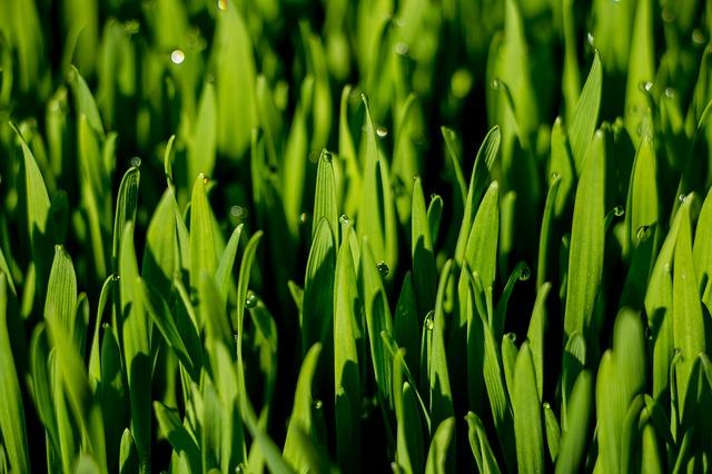 Kapky Rosy Zelená