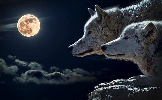 vlci u měsíce
