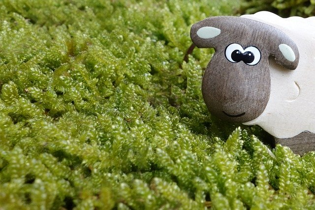 ovce v mechu