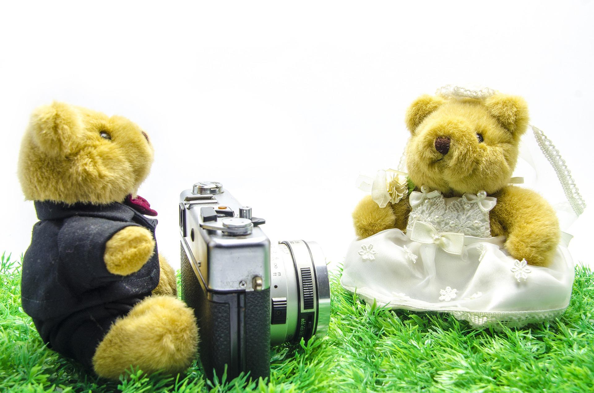 svatba medvědů
